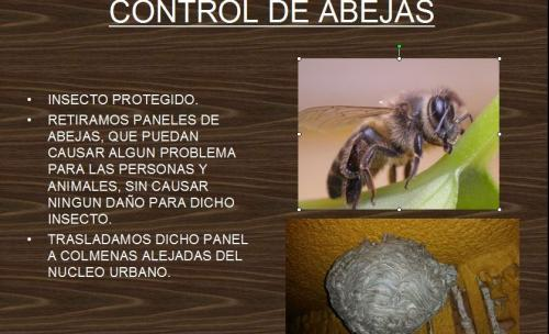 control de panales de abejas